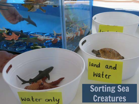 Sorting-Sea-Creatures-Underwater-Zoo